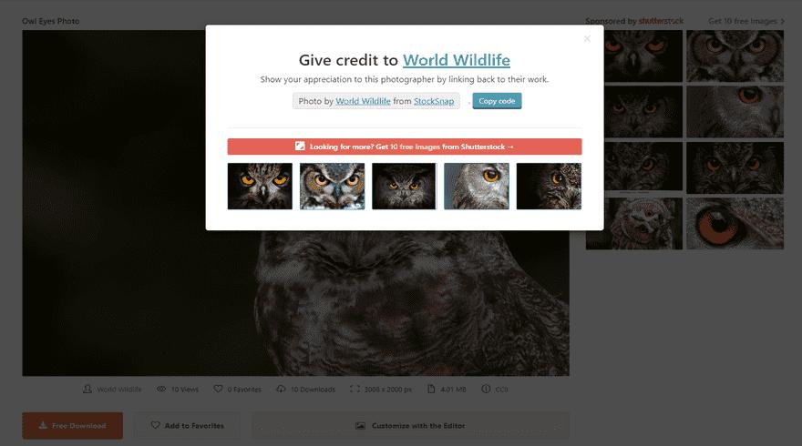 stocksnap owl free download attribution