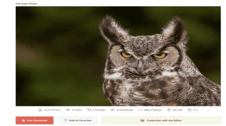 stocksnap owl photo for website
